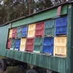 Bienenstöcke der Imkerei Ökohof Fläming in der Altmark