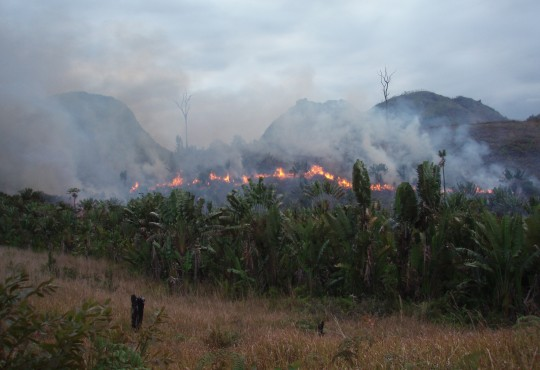 Manantenina bushfire by Diorit CC BY-SA 3.0 @wikimedia.org