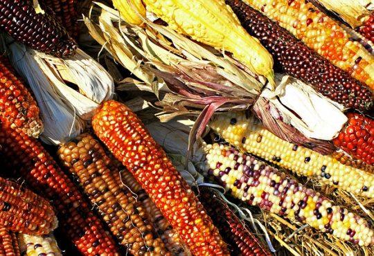 corn-1235895_640
